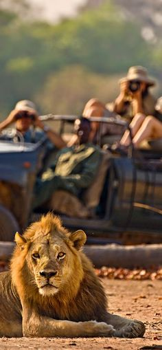 <3Safari in Africa<3