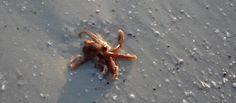 animales-marinos-6
