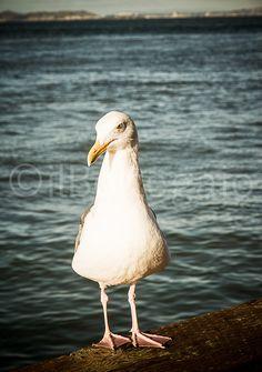 """Foto+""""Seagull""""+20x30+Fujifilm+Paper+di+La+Bottega+delle+foto+su+DaWanda.com"""