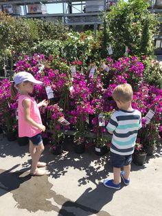 Little School of Smith's- Garden Week Different Types Of Flowers, Different Plants, Strip Cards, Family Flowers, Flower Seeds, Small Gardens, Flower Petals, Beautiful Day, The Unit