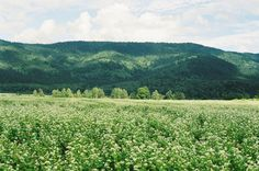 nature scene // forest // nature // aesthetic // wilderness // photography // landscape