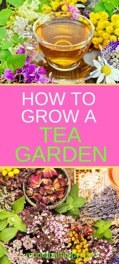to Grow a Tea Garden will teach you how to design a nourishing garden with the right plants. You can plant your garden based on your favorite teas and ideas on how to add them to your backyard. Compost, Organic Gardening, Gardening Tips, Gardening Direct, Gardening Zones, Indoor Gardening, Gardening Vegetables, Organic Plants, Organic Vegetables