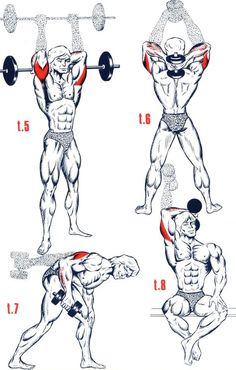 Gym World: More Than 30 Differnt Triceps Exercice ! Gym Workout Tips, Fitness Workouts, Yoga Fitness, Fitness Motivation, Fitness Plan, Workout Schedule, Workout Videos, Triceps Workout, Bodybuilding Supplements