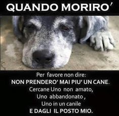 Vero amore Pet Loss, Dog Lovers, Sad Dog Stories, Dog Quotes Love, Pet Memorials, Stop Animal Cruelty, Old Dogs, Animal Quotes, So Sad