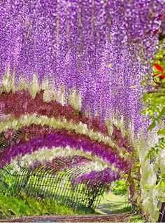 The Wisteria Tunnel at Kawachi Fuji Gardens, in Kitakyushu, Japan--one of my favorite scented flowers!