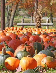 The Mega List of Fun & Cheap (and Free!) Halloween and Fall Activities