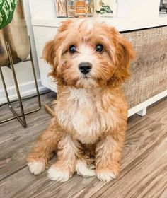 Super Cute Puppies, Cute Baby Dogs, Cute Little Puppies, Cute Dogs And Puppies, Cute Little Animals, Cute Funny Animals, Pet Dogs, Pets, Doggies