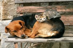 40-pictures-of-cats-on-tops-of-dogs-feature-image