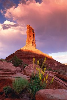 Princess Plume in Valley of the Gods, Utah. Photo by David Schultz
