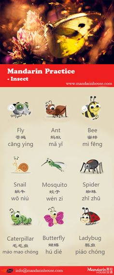 Insect Sports in Chinese.For more info please contact: bodi.li@mandarinh... The best Mandarin School in China.