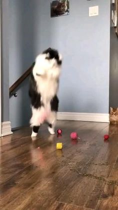 Funny cute cat care Cats Doing Funny Things, Funny Cute Cats, Silly Cats, Cute Cat Gif, Cute Funny Animals, Baby Cats, Cats And Kittens, Cat And Dog Videos, Diy Canvas Art