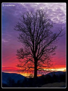 Silhouetted tree at dawn against the Unaka mountains in Tennessee | by J & G Photos via BlueRidgeCountry