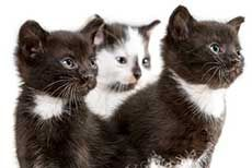 Early Spaying and Neutering in Cats - Get em While Theyre Young | petocracy