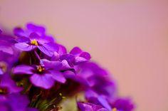 Tiny flowers -