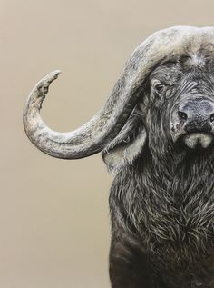 S 'Thunder Without Rain' by Coral Rose. Portrait of a cape buffalo (Syncerus caffer). Pastel 68x48cm