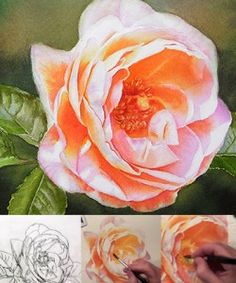 Rose in a loose Watercolor Style