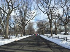 Central Park today #nyseeing #nbc4ny #loves_nyc #loves_united_team #nycprimeshot #made_in_ny #gotitnyc #icapture_nyc #ig_nycity #what_i_saw_in_nyc #welovethiscity #nydngram #abc7ny #the_usa_gram #nypix #ttfe #igphotoworld #nycprime_ladies #SeeYourCity #travel #instagram #igs_america #newyork_world #nyc_community #ttfe #newyorkcity #blizzard2016 #blizzardjonas #fromwhereilyft #centralpark #winter by nyseeing