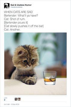 23 Animals Humor memes - Thinking Meme Funny Cat Fails, Cat Jokes, Funny Cats And Dogs, Funny Cat Memes, Funny Tweets, Funny Stuff, Cat Stuff, Hilarious, Dog Cat