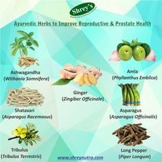 Sexual health and well-being is an important aspect of human life and nature has provided many nutrients to take care of it. Ayurveda provides a kaleidoscope of knowledge when it comes to boosting fertility, libido and more. Here are a few time tested ayurvedic herbs that improve reproductive health. Shop for related products on www.shreynutra.com