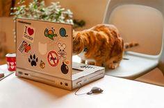 gato-arranhador-monitor-4