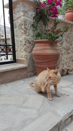 Cats in Crete, Greece Crazy Cat Lady, Crazy Cats, Super Cute Animals, Cat 2, Summer Girls, All Pictures, Neko, Cats And Kittens, Wine Subscription