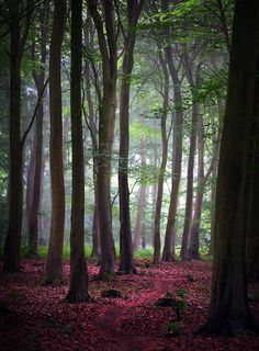 Friston Forest by Alan Mackenzie (Friston, England) Mother Earth, Mother Nature, Beautiful World, Beautiful Places, Beautiful Forest, Beautiful Scenery, Espanto, Tree Forest, Forest View