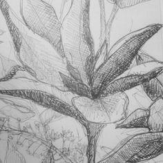 #sketchbook #drawings