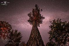 massive tree by SandroRizzolo. @go4fotos
