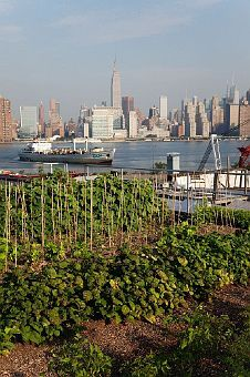 rooftop gardens - best of both worlds, city & fresh produce  http://theselby.com/7_21_10_AnnieEagleSt/