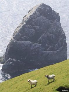 St Kilda consists of four main islands - Hirta, Dun, Boreray and Soay as well as several sea stacs. Visitors are welcome to visit St Kilda. Village Bay on Hirta is the main access point. Please get in touch with the Area Manager or Ranger before you visit. We can then give you the information you require to access responsibly and safely, without disturbing the nesting birds. via www.facebook.com/...