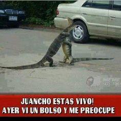 videoswatsapp.com imagenes chistosas videos graciosos memes risas gifs chistes divertidas humor http://ift.tt/2rJk9fV