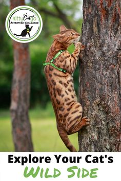 We challenge you to get out there and do more with your cat! We've compiled 55 tasks in 4 different difficulty levels. The KittyCatGO Adventure Challenge will push you and your cat while also providing inspiration of new things to try. Click to join the fun! Hiking Accessories, Adventure Cat, New Things To Try, Cat Activity, Cat Backpack, Cat Harness, Happy Animals, Cat Furniture, Amazing Adventures