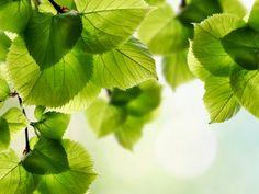 Fondo de hojas.