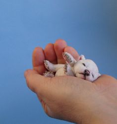 Hiko miniature baby polar Bear Cub    I don't even know what to do right now. I think my head might explode