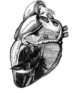 Artistic & creative illustration of the heart.  Inside you'll find a forest scene, a bird & a hand about to shake the hand of another.  What I found most interesting is the woman sleeping in the center.  So much symbolism.