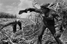 Cortadores de cana de açúcar. Província de Havana, Cuba. 1988 Projeto: Trabalhadores ©Sebastião Salgado