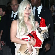 Lady Gaga And Fiancé Taylor Kinney Show Off Their Festive Furbabies - http://oceanup.com/2015/12/13/lady-gaga-and-fiance-taylor-kinney-show-off-their-festive-furbabies/
