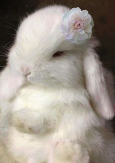 Bunny-fluff w/ flower