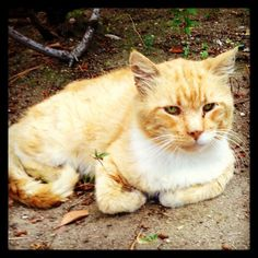 Here kitty, kitty: Should you tame a feral cat