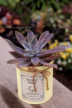 succulent Succulents In Containers, Cacti And Succulents, Planting Succulents, Succulent Display, Tin Can Crafts, Cactus Y Suculentas, Flower Photos, Diy Flowers, Garden Art