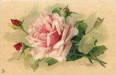 one pink rose, faces up to left, two buds to left, another faces up,stalks right