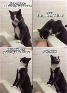26 Things That Will Only Happen To Cat Owners. Is Just Hilarious. I Love Cats, Crazy Cats, Cute Cats, Cat Fun, Memes Humor, Cat Memes, Funny Memes, Dog Jokes, Funniest Memes