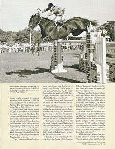 1905 Best Horses images in 2019   Britain, News south africa