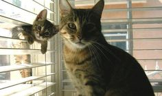 Photobombing Feline: Cutest Kitten Ever Steals Cool Cat's Spotlight! | Cambio