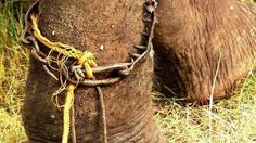 Petition · Save sacred elephants from being tortured and abused in India · Change.org