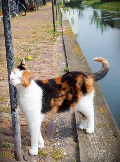 Adorable dutch cat