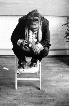 <br><br>Jill Freedman<br>Photographer Chimp<br>New York City<br>1970s<br><br>Copyright © Jill Freedman
