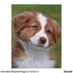 Australian Shepherd Puppy Puzzle