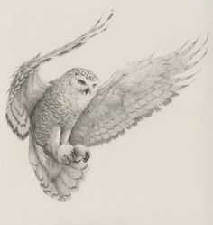 Realistic Sketches of Birds