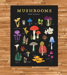 Mushroom & Fungus Classification Art Print by Idlewild Co. on Scoutmob Shoppe